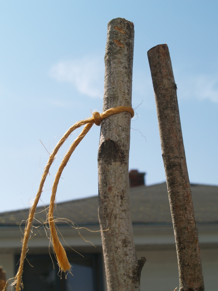 building a cucumber trellis (6/6)