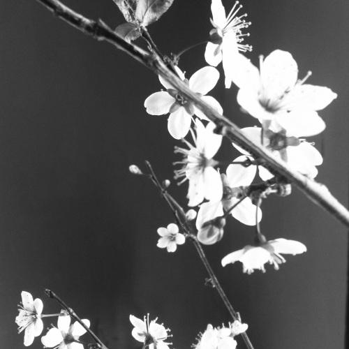photo-18