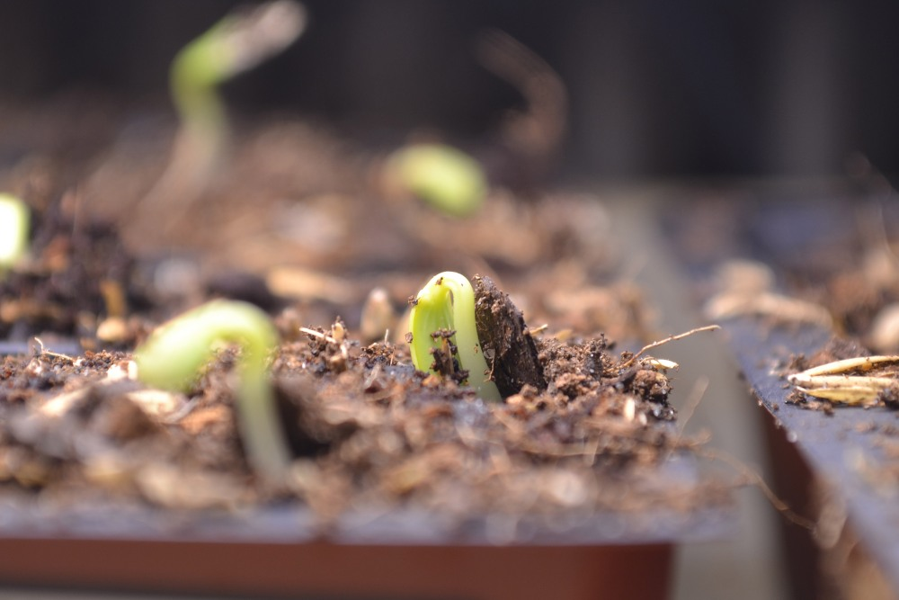 seed starting tips (3/4)