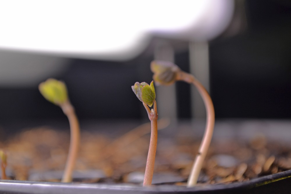 seed starting tips (4/4)