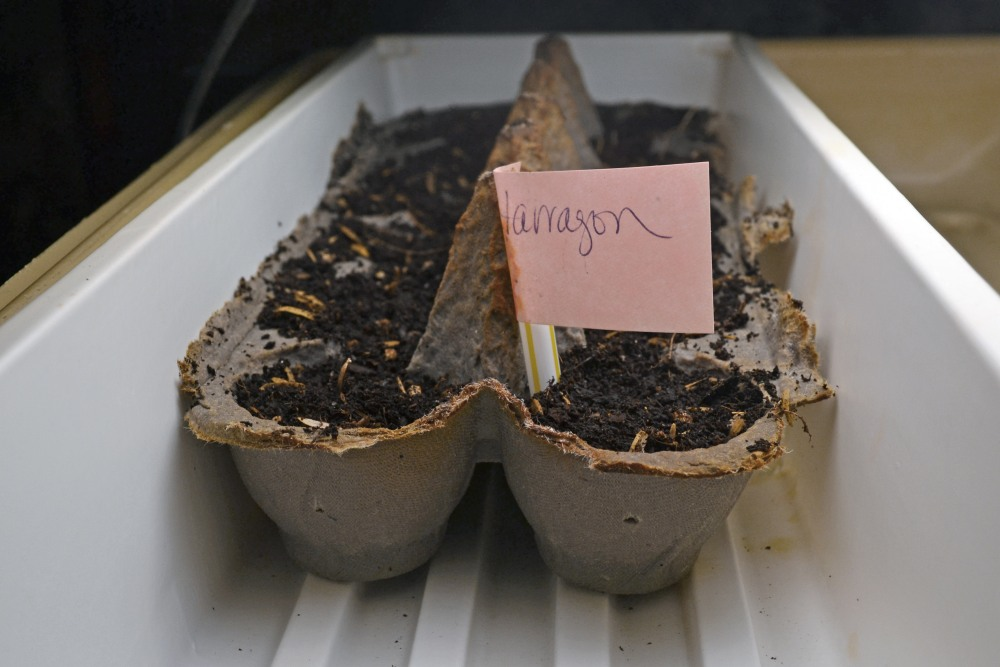 seed starting tips (2/4)
