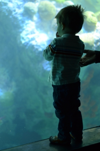 "Our visit to the aquarium where Anderson yelled ""BIG BIG FISH"" continually.  He was completely enamored by this place."