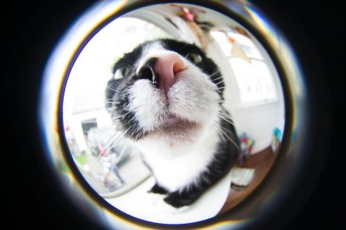 Stevie's nose, Lensbaby Fisheye Lens