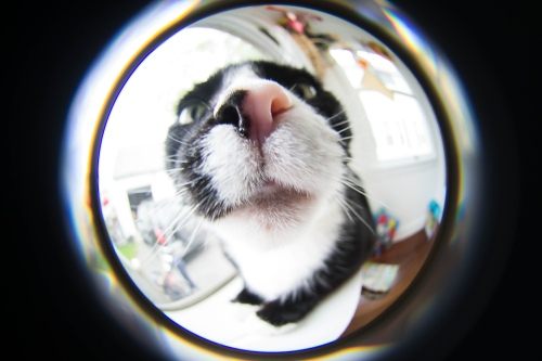 Stevie's nose, Lensbaby Fisheye Lens
