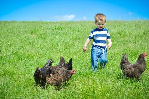 Future chicken farmer.