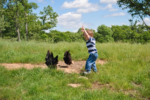 Huggies! (He really tried hard to score some hugs from these four chickens.)